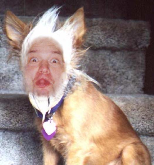 sashadog