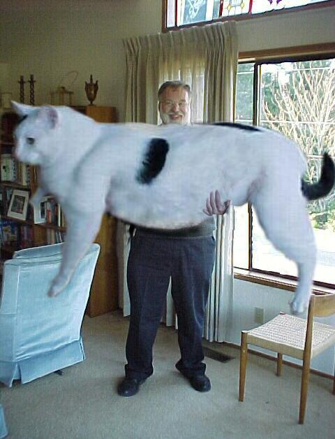 worlds biggest cat